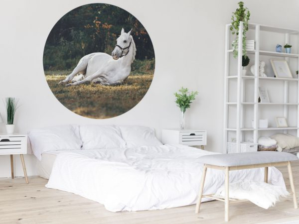 Mockup-liggend-wit-paard.jpg