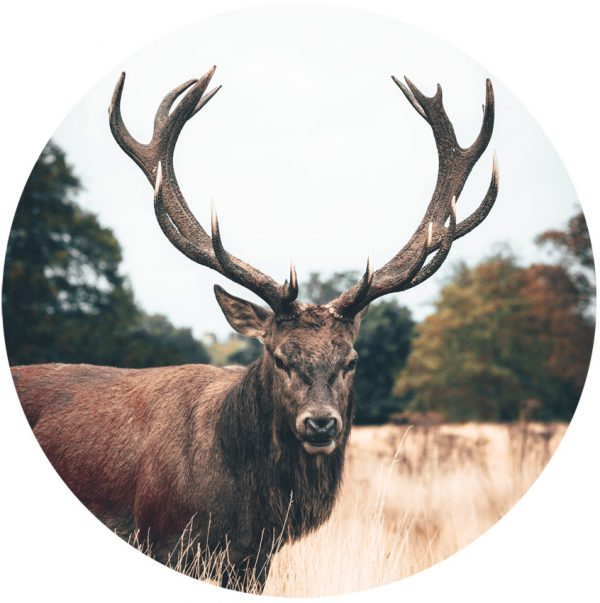 behangcirkel-Red-Stag-1000px.png