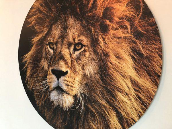 sunset-lion-foto.jpg