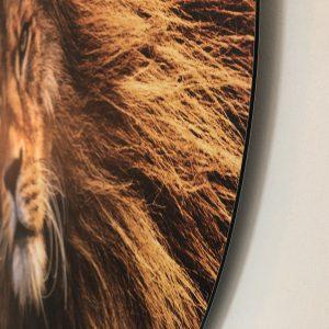 sunset-lion-rand.jpg