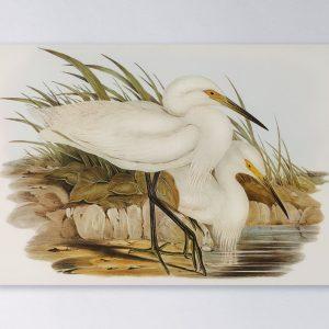 Wandpaneel-rechthoek-White-Heron-couple-2048px.jpg