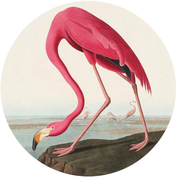 behangcirkel-flamingo-1000px.png