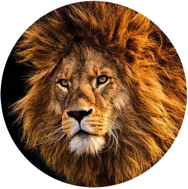 behangcirkel-sunset-lion-1000px.png