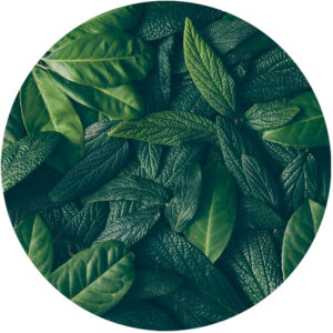 behangcirkel-bladeren-1000px.png